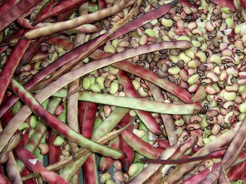Feijão de corda, verde e verde orgânico: Informação Nutricional
