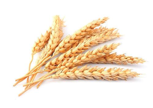 Fibra de trigo: Informação Nutricional