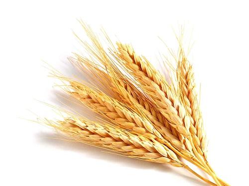 Germe de trigo: Informação Nutricional