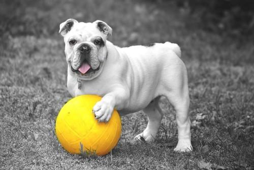 Como se exercitar com seu cachorro