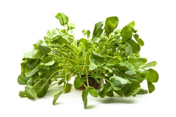 Agrião ao vinagrete – Informação Nutricional