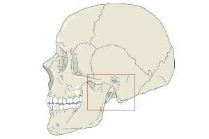 Articulação Temporomandibular (ATM)