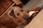 Seu cachorro precisa parar de comer estes alimentos!