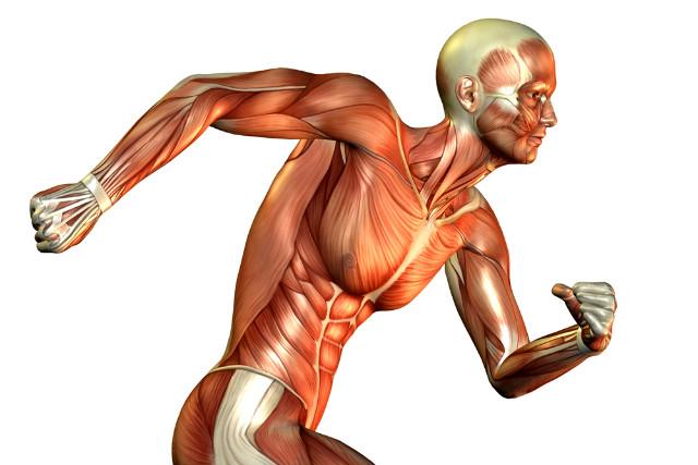 O que são Fáscias Musculares e Rotas Miofasciais